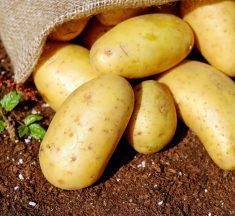 The Potato Battery Kit?