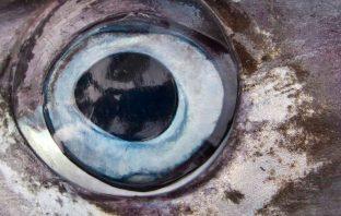 Mozambique trades Tuna debt for Future Gas Revenue