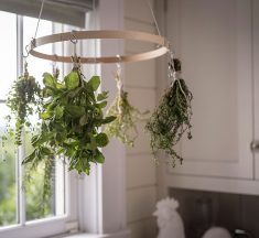 Why Not Dry Your Own Herbs?